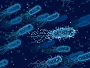 Désinfection de bactéries par Callisto Hygiène