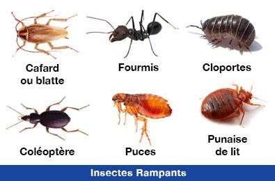 Désinsectisation des insectes rampants