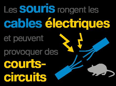 les souris rongent les cables électriques