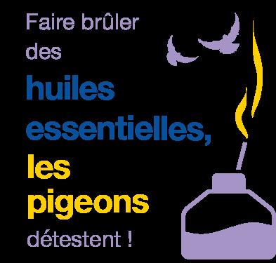 éloigner les pigeons grâce aux huiles essentielles