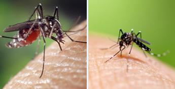 Le moustique tigre fait partie des insectes nuisibles