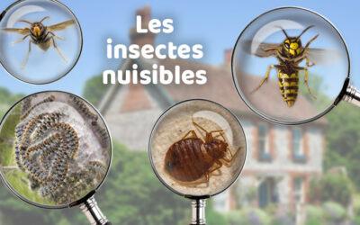 Reconnaître les insectes nuisibles dans la maison