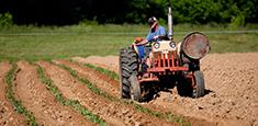 L'agriculture fait partie des professions ou l'on peut attraper la maladie de la leptospirose